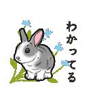もふもふウサギ 2(個別スタンプ:12)