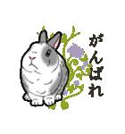もふもふウサギ 2(個別スタンプ:30)