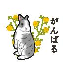 もふもふウサギ 2(個別スタンプ:31)