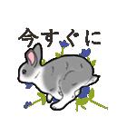 もふもふウサギ 2(個別スタンプ:36)