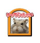 ハムスターのハム太 ☆Photo ver.2☆(個別スタンプ:03)