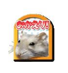 ハムスターのハム太 ☆Photo ver.2☆(個別スタンプ:04)