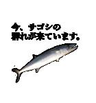 リアル釣りスタンプコレクション(個別スタンプ:1)