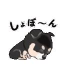 動く!黒チワワ(個別スタンプ:20)
