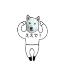 俺やで!ゆかいな白柴わんこ3(大阪弁)