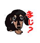 動く!ダックしゅⅢ(個別スタンプ:13)