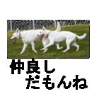 ホワイトシェパード 実写版 No,1(個別スタンプ:20)
