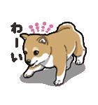 わんこ日和 柴犬のこども(個別スタンプ:02)