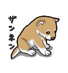 わんこ日和 柴犬のこども(個別スタンプ:04)