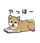 わんこ日和 柴犬のこども(個別スタンプ:05)