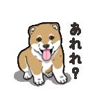 わんこ日和 柴犬のこども(個別スタンプ:06)