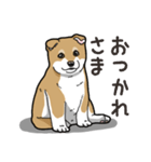 わんこ日和 柴犬のこども(個別スタンプ:08)