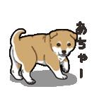 わんこ日和 柴犬のこども(個別スタンプ:37)
