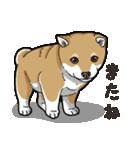 わんこ日和 柴犬のこども(個別スタンプ:40)