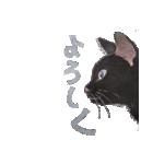 ゆめねこ5黒(個別スタンプ:07)