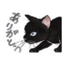 ゆめねこ5黒(個別スタンプ:09)