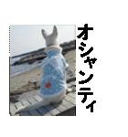 ホワイトシェパード 実写版 No,3(個別スタンプ:07)