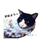 うちのむぅちゃん【実写版】(個別スタンプ:01)