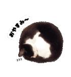 うちのむぅちゃん【実写版】(個別スタンプ:03)