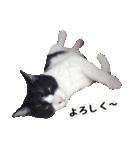 うちのむぅちゃん【実写版】(個別スタンプ:04)