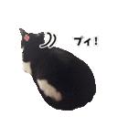 うちのむぅちゃん【実写版】(個別スタンプ:05)
