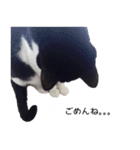 うちのむぅちゃん【実写版】(個別スタンプ:06)