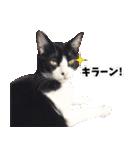 うちのむぅちゃん【実写版】(個別スタンプ:07)