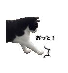 うちのむぅちゃん【実写版】(個別スタンプ:09)