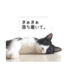 うちのむぅちゃん【実写版】(個別スタンプ:15)