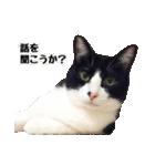 うちのむぅちゃん【実写版】(個別スタンプ:16)