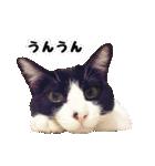 うちのむぅちゃん【実写版】(個別スタンプ:17)