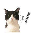 うちのむぅちゃん【実写版】(個別スタンプ:18)