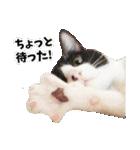 うちのむぅちゃん【実写版】(個別スタンプ:19)