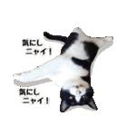 うちのむぅちゃん【実写版】(個別スタンプ:20)