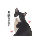 うちのむぅちゃん【実写版】(個別スタンプ:22)