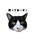 うちのむぅちゃん【実写版】(個別スタンプ:27)