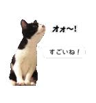 うちのむぅちゃん【実写版】(個別スタンプ:29)