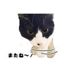 うちのむぅちゃん【実写版】(個別スタンプ:32)