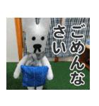 【実写】かわいそくんスタンプ①(個別スタンプ:5)