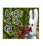 【実写】かわいそくんスタンプ①(個別スタンプ:6)