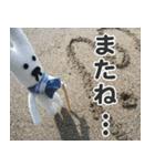 【実写】かわいそくんスタンプ①(個別スタンプ:7)
