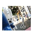 【実写】かわいそくんスタンプ①(個別スタンプ:10)