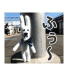 【実写】かわいそくんスタンプ①(個別スタンプ:11)