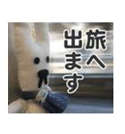 【実写】かわいそくんスタンプ①(個別スタンプ:16)