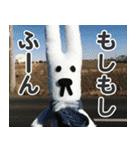 【実写】かわいそくんスタンプ①(個別スタンプ:17)
