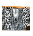 【実写】かわいそくんスタンプ①(個別スタンプ:19)