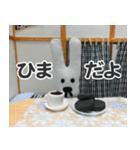 【実写】かわいそくんスタンプ①(個別スタンプ:25)