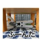 【実写】かわいそくんスタンプ①(個別スタンプ:27)