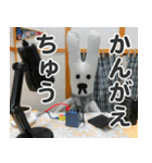 【実写】かわいそくんスタンプ①(個別スタンプ:32)