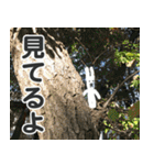 【実写】かわいそくんスタンプ①(個別スタンプ:34)